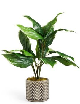 Medium Hosta Plant In Ceramic by Marks & Spencer