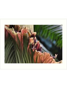 Amorphophallus Titanum   Plate No.# Iii by Dbernadette930