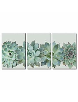 "Wall26 3 Panel Canvas Wall Art   Closeup Tropical Succulent Plant   Giclee Print Gallery Wrap Modern Home Decor Ready To Hang   16""X24"" X 3 Panels by Wall26"