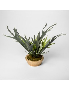 "14.5"" X 14"" Artificial Staghorn Fern In Pot Green   Threshold™ by Threshold"