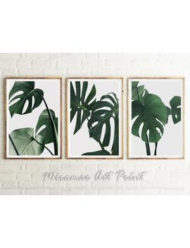 Monstera Set, Green Prints Set, Green Leaves Set, Monstera Leaf Poster Set, Set Of 3 Piece Botanical Set, Wall Art Tropical Printable Set by Etsy
