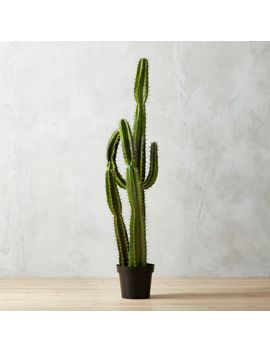 "Potted 60"" Faux Cardón Cactus by Crate&Barrel"