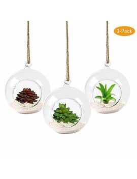 Pack Of 3 Hanging Round Glass Terrarium With String   Heat Resistant,Handmade,High Borosilicate 8 Cm Diameter Air Plant Hanging Glass Terrarium  Refresh Your Air by Kymake