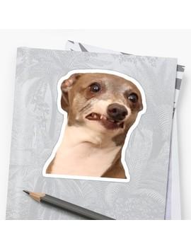 Jenna Marbles Dog Kermit Still Being Nervous by Saltytrashinc