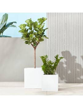 Blox Galvanized Hi Gloss White Planters by Crate&Barrel