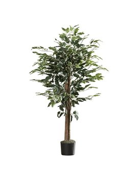 Variegated Bush Ficus Tree In Pot by Alcott Hill