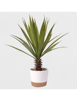 """17"""" Potted Yucca Plant   Lloyd & Hannah by Shop This Collection"""