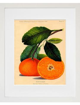 Food Art Oranges Kitchen Wall Decor by Etsy