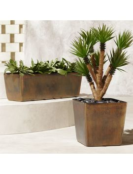 Doro Planters by Crate&Barrel