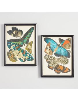 Papillons By Emile Allain Seguy Framed Wall Art Set Of 2 by World Market