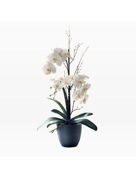 Faux Potted Tall Orchids   White by West Elm