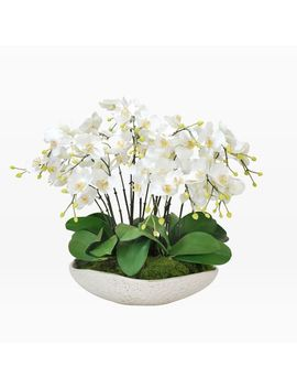 Faux Orchid In Durain Bowl   White by West Elm