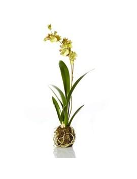 "Northlight 16.5"" Decorative Artificial Green Silk Odontoglossum Orchid Drop Plant by Northlight"