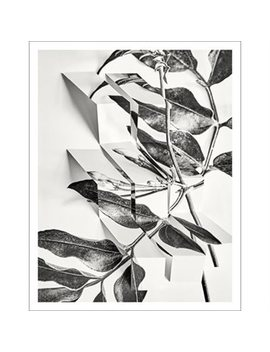 "Art Print Arrangement 8 11"" X 14"" by Permanent Press Editions"