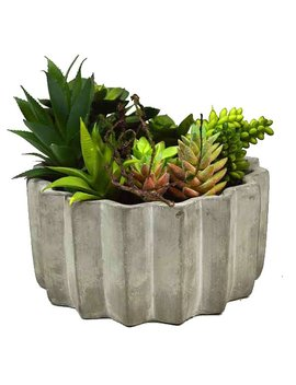 Succulent Plant In Pot by Gt Direct Corp