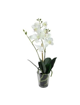 """Northlight 18.5"""" Potted Phalaenopsis Orchid Artificial Silk Flower Arrangement In Vase by Northlight"""