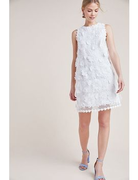 Daisy Lace Shift Dress by Eri + Ali
