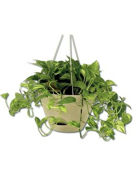 Flare Self Watering Resin Hanging Planter by Misco Home And Garden