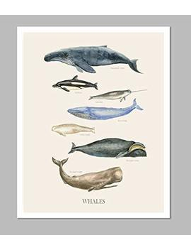 Whale Poster, Educational Ocean Animal Poster, Animal Picture Wall Art For Kid Room, Whale Art Print, by Amazon