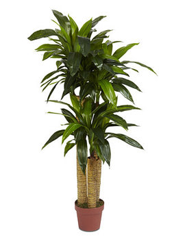 4' Corn Stalk Dracaena Real Touch Plant by Nearly Natural
