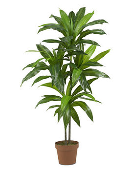 "43"" Dracaena Real Touch Plant by Nearly Natural"