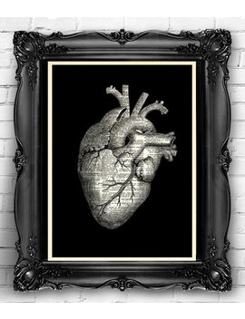 """<Span Data Preview Title="""""""">Heart Human Anatomical Heart Print  Dictionary Page, Anatomy Heart Wall Decor, H...</Span>          <Span Data Full Title="""""""" Aria Hidden=""""True"""" Class=""""Display None"""">Heart Human Anatomical Heart Print  Dictionary Page, Anatom... by Etsy"""