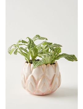 Lotus Pot by Anthropologie