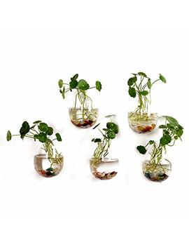 5 Packs Wall Hanging Planters Glass Plant Pots Water Plant Containers Glass Flower Pots Wall Hanging Glass Planters Plant Containers Hanging Planters Air Plant Terrariums Glass Terrarium by Fashiostorm