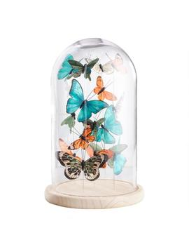 Glass Butterfly Cloche by World Market