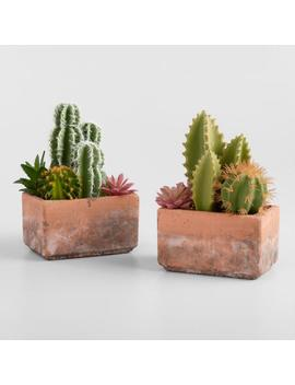 Faux Mixed Cactus And Succulent Arrangement In Pot Set Of 2 by World Market