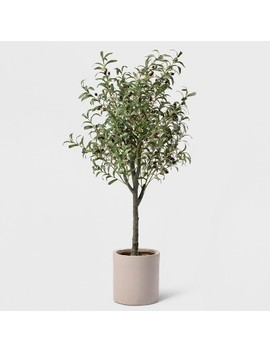 "60"" Potted Olive Tree   Lloyd &Amp; Hannah by Lloyd & Hannah"