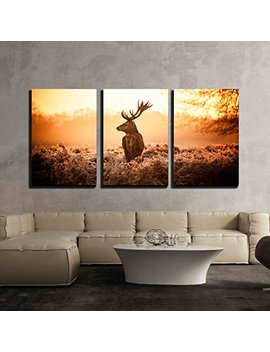 """Wall26   3 Piece Canvas Wall Art   Red Deer In Morning Sun   Modern Home Decor Stretched And Framed Ready To Hang   24""""X36""""X3 Panels by Wall26"""
