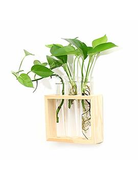 Ivolador Wall Mounted Hanging Planter Test Tube Flower Bud Vase Tabletop Glass Terrariumin Wooden Stand Perfect For Propagating Hydroponic Plants Home Garden Wedding Decoration by Ivolador I