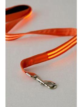 illumiseen-led-4-ft-dog-leash by illumiseen