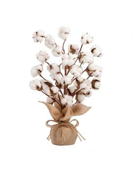 Faux Cotton Tree With Burlap Base by World Market