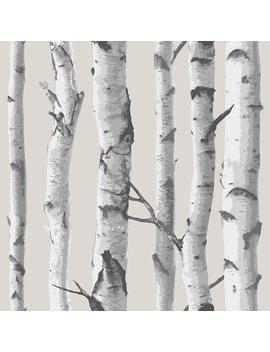 Multi Color Birch Tree Wallpaper by Nu Wallpaper
