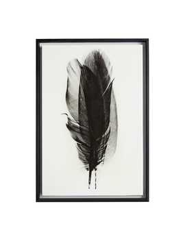 Waving Feather Framed Art by Pier1 Imports