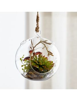 Hanging Glass Terrarium by Crate&Barrel