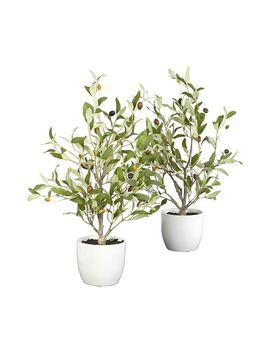 Faux Olive Tree In Vase, Set Of 2 by Pottery Barn