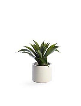 Aloe Vera Arrangement In Round Pot by Asda