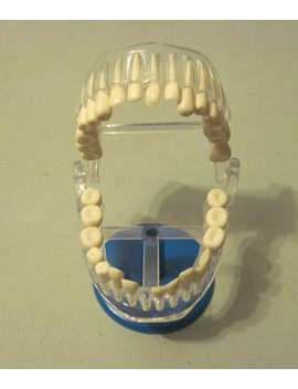 Vintage Dental School Tooth Display With Removable Teeth by Etsy