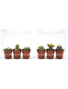 Set Of 3 Cactus Plant by Homebase