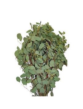 Seeded Eucalyptus Greenery (40 Stems) by Item # 980061582