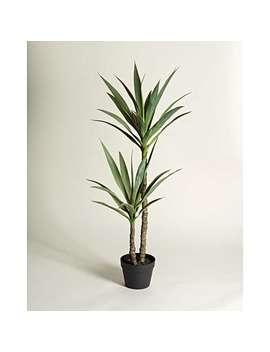Yucca Tree Faux Plant by Olivar Bonas