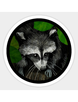Raccoon Sticker by Katherine Blower Designs