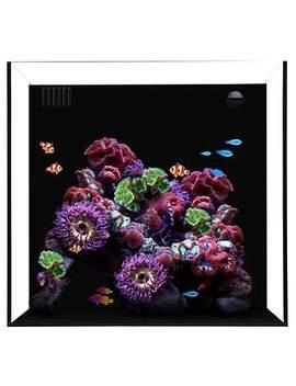 """Waterbox Cube 20 Gallon Aquarium, 17.7"""" L X 17.7"""" W X 15.8"""" H Waterbox Cube 20 Gallon Aquarium, 17.7"""" L X 17.7"""" W X 15.8"""" H by Waterbox"""
