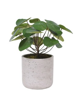 Pancake Plant Planter Decoration by Bloomr
