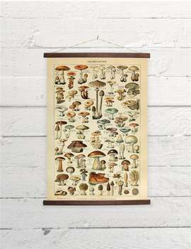 Vintage Mushrooms Larousse Natural History Canvas Poster Print Wooden Wall Chart by Etsy
