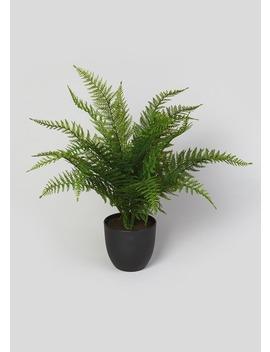 Fern Tree In Pot (62cm X 60cm X 60cm) by Matalan