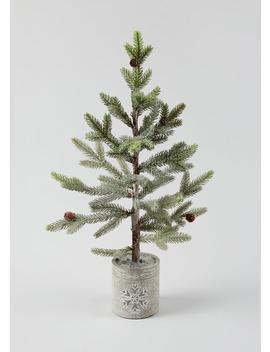 Potted Christmas Fir Tree (62cm X 12cm X 12cm) by Matalan